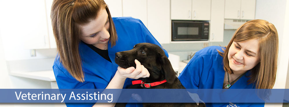 two MSC veterinary assisting students practicing lab work on a puppy
